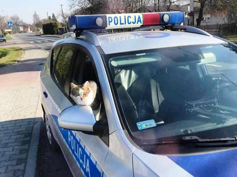 KPP Oświęcim. Kotek w radiowozie