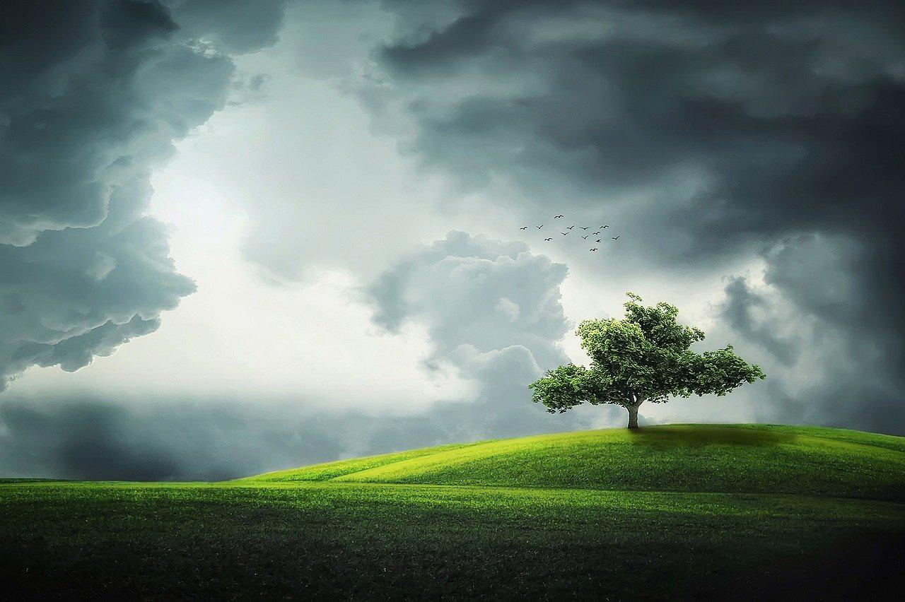 tree-832079_1280 pixabay-comBessi-909086