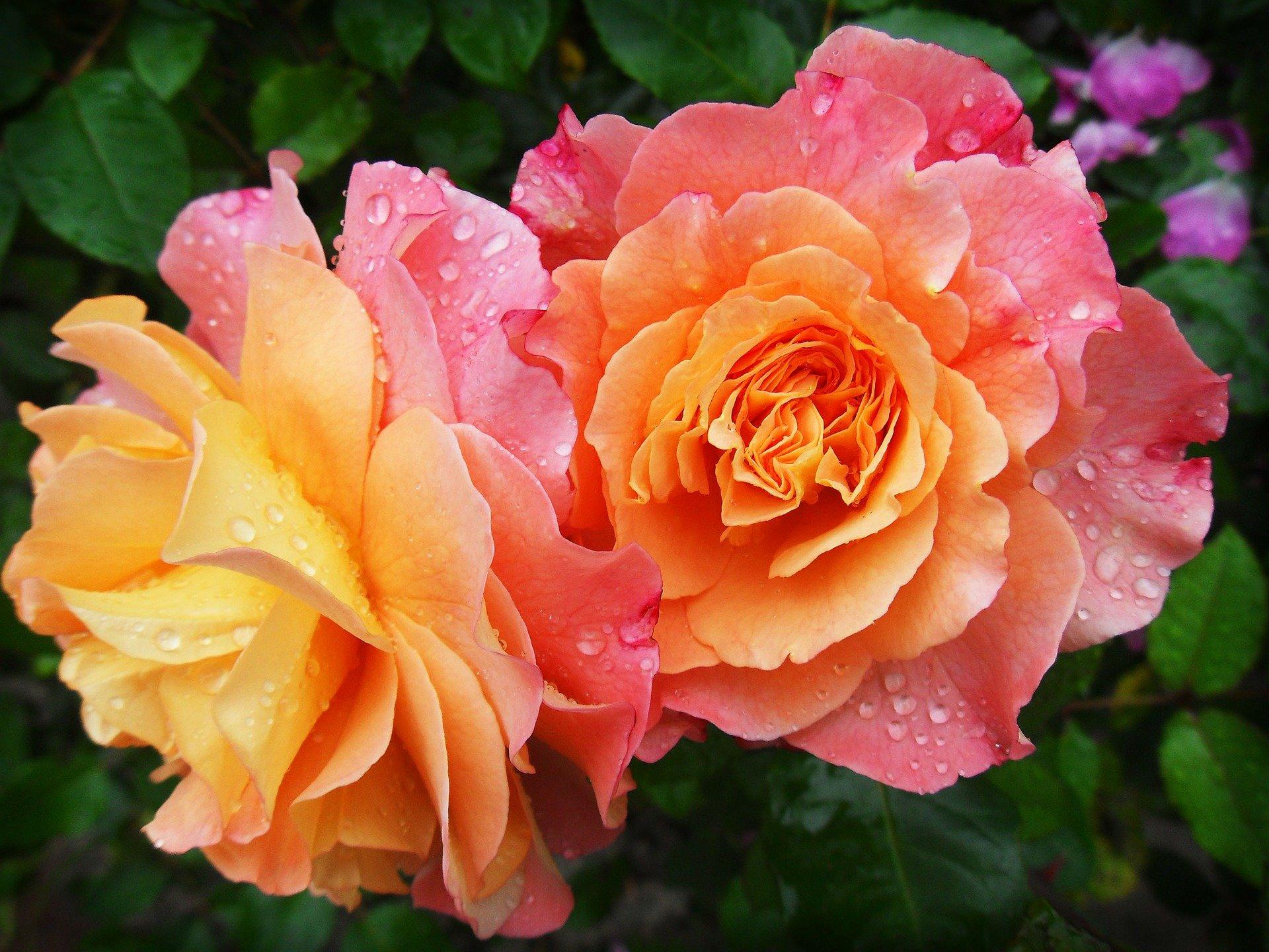 Kwiaty Dzień Kobiet