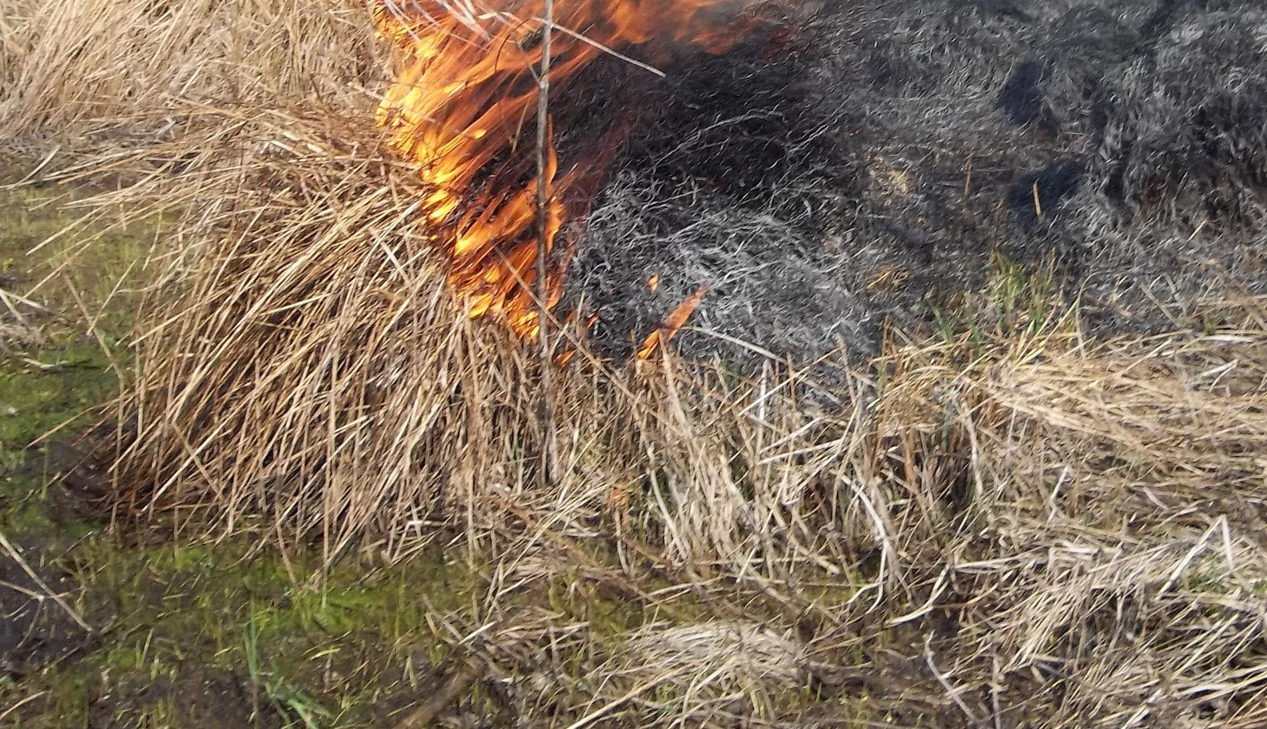 Trawy-pożar